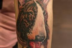 Tattoo-bullterier