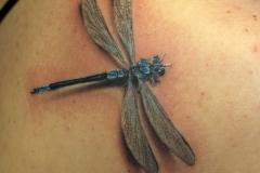 Tattoo-dragonflyyy
