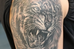 Tatu-tigr-vdv