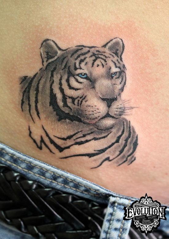 Tatu-legkiy-tigr