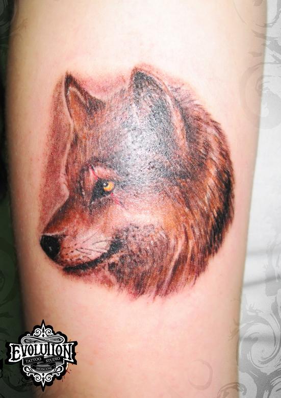 Tatuirovka-volka-na-ruke