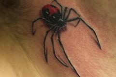 Spaun-tattoo